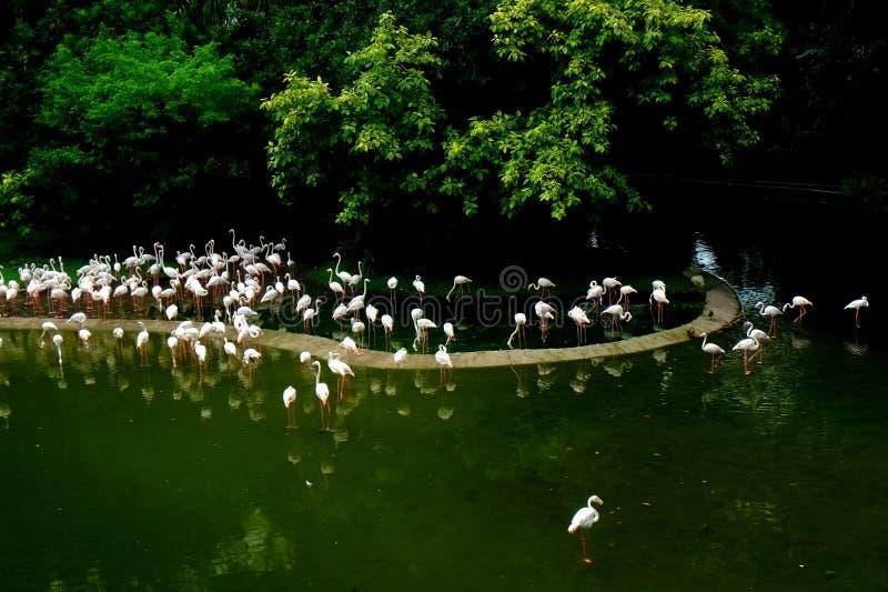 Eine Menge von weißen Vögeln stockbild