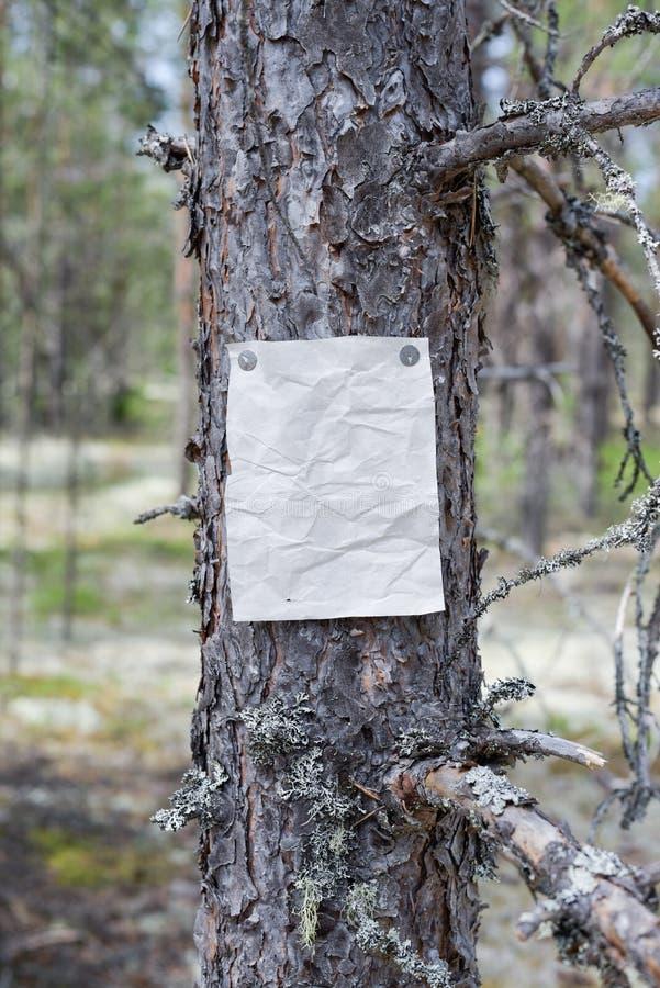 Eine Mitteilung, ein Buchstabe, eine Mitteilung auf einem Baum im Wald lizenzfreies stockfoto
