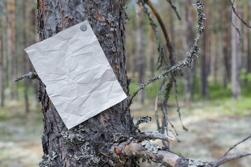Eine Mitteilung, ein Buchstabe, eine Mitteilung auf einem Baum im Wald stockbild
