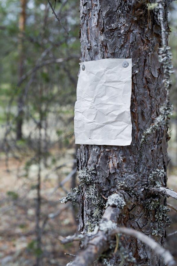 Eine Mitteilung, ein Buchstabe, eine Mitteilung auf einem Baum im Wald lizenzfreie stockbilder