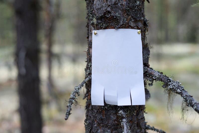 Eine Mitteilung, ein Buchstabe, eine Mitteilung auf einem Baum im Wald lizenzfreies stockbild