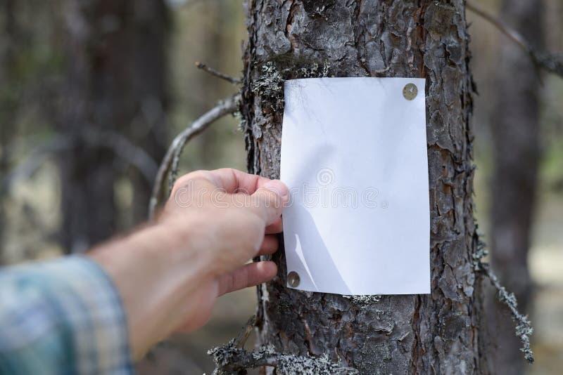 Eine Mitteilung, ein Buchstabe, eine Mitteilung auf einem Baum im Wald lizenzfreie stockfotos