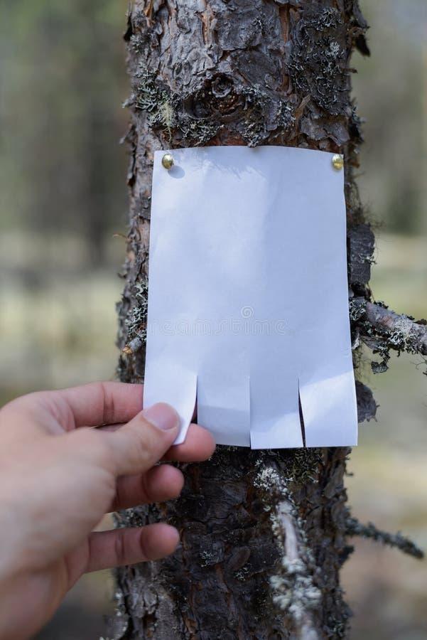 Eine Mitteilung, ein Buchstabe, eine Mitteilung auf einem Baum im Wald stockfotos