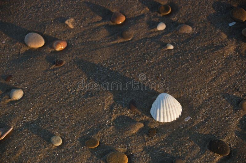 Eine Muschel und einige Kiesel lizenzfreie stockfotografie