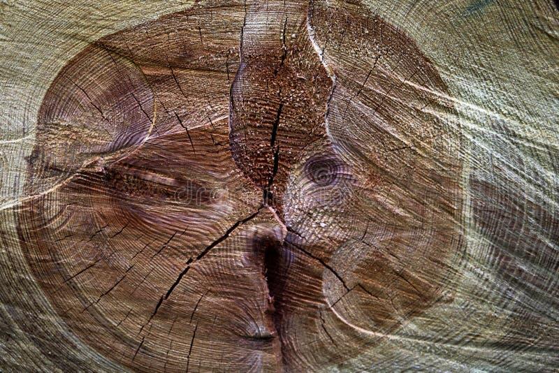 Eine Nahaufnahme des Querschnitts der Stümpfe, das Altern zeigend kreist, die Beschaffenheit des Baums ein stockbilder