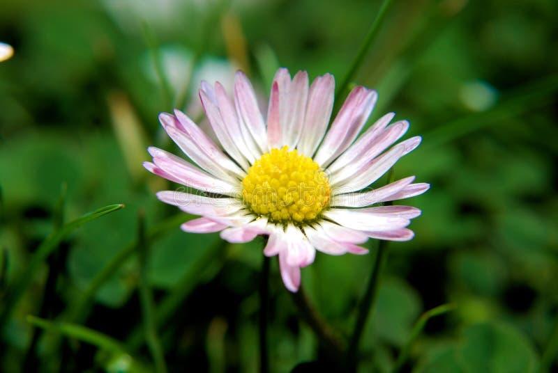 Eine Nahaufnahme einer schönen kleinen Blume lizenzfreie stockfotografie