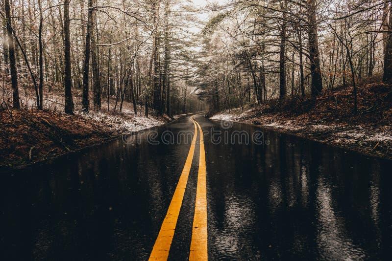 Eine nass Straße im Wald lizenzfreies stockfoto