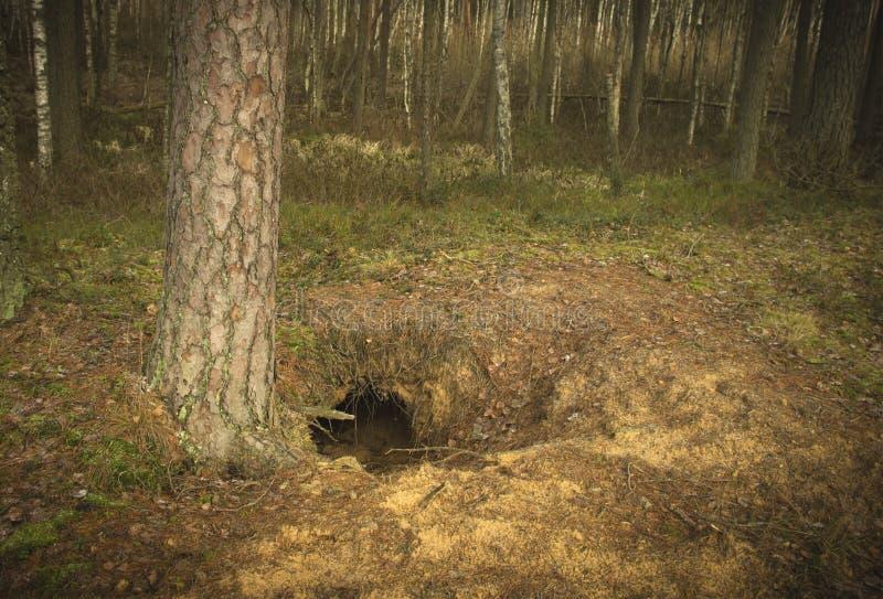 Eine natürliche Wolf ` s Höhle stockfoto