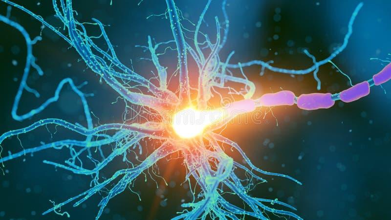 Eine Nervenzelle lizenzfreie abbildung
