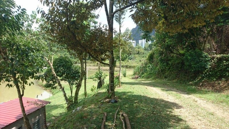 Eine nette grüne Landschaft mit städtischem Beton weit weg lizenzfreies stockfoto