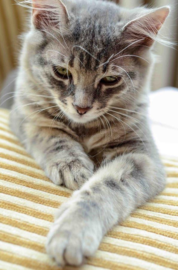 Eine nette Katze auf Sofa stockbilder