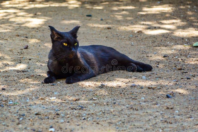 Eine nette Katze, die aus den Grund liegt lizenzfreie stockfotos