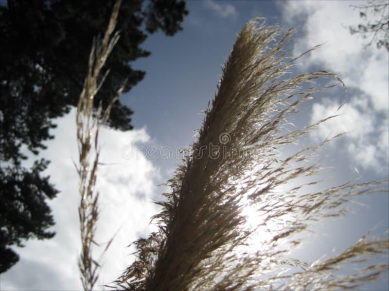 Eine Neuseeland-einheimische Pflanze lizenzfreies stockbild
