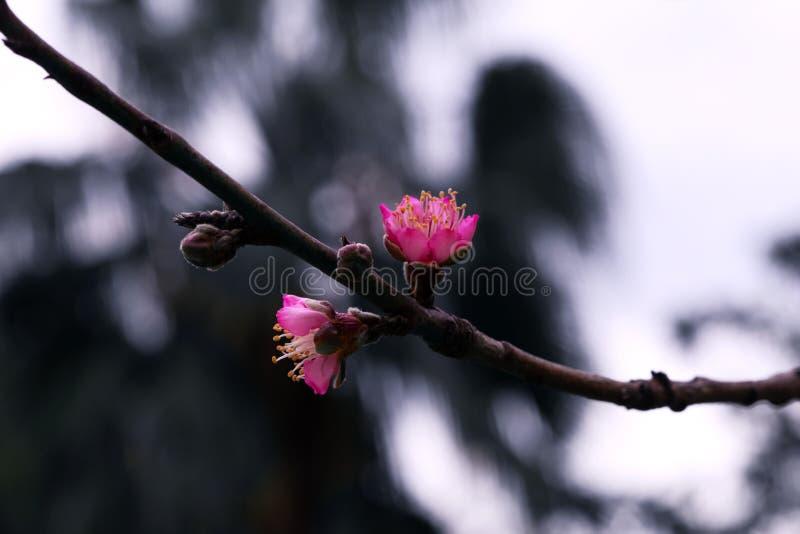 Eine Niederlassung mit Blume stockfoto