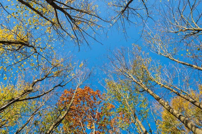 Eine niedrige Winkelsicht des bunten Herbstlaubs stockfotos