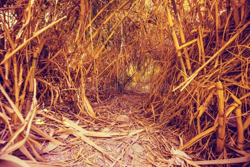 Eine Oase in der W?ste Ein Tunnel im Bambusdickicht lizenzfreies stockfoto