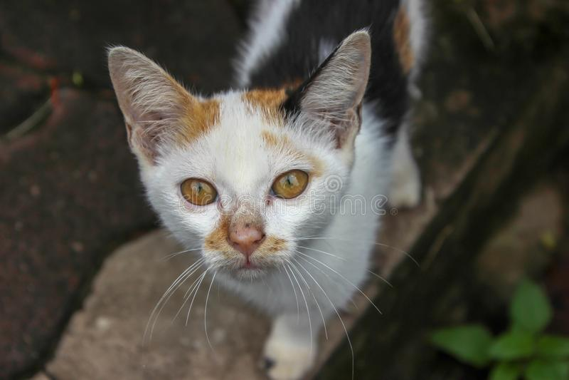Eine obdachlose Katze macht Augäpfel lizenzfreie stockbilder
