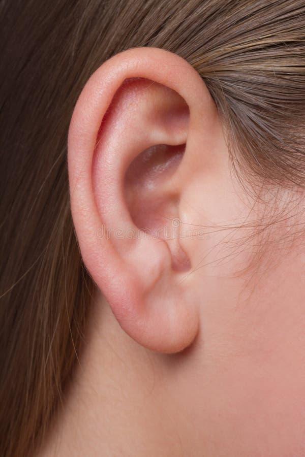 Eine Ohrnahaufnahme der jungen Frau lizenzfreies stockbild
