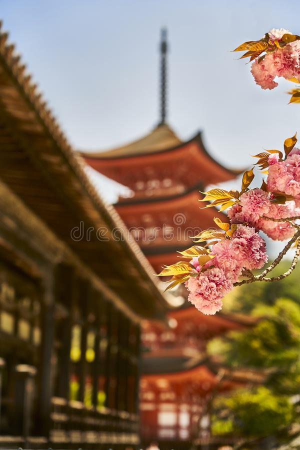 Eine Pagode, ein Pavillon und Kirschblüte stockfotografie