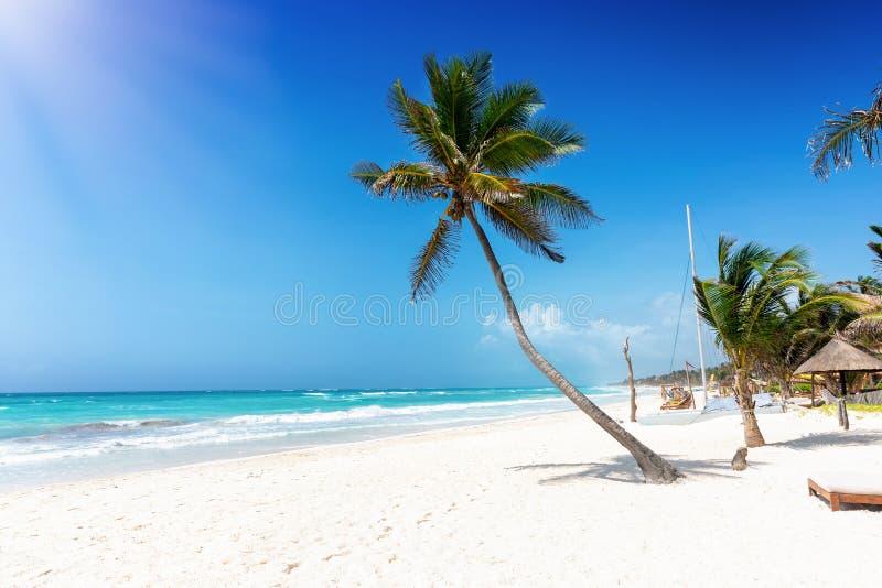 Eine Palme auf dem karibischen Strand von Tulum, Riviera-Maya, Mexiko lizenzfreies stockbild