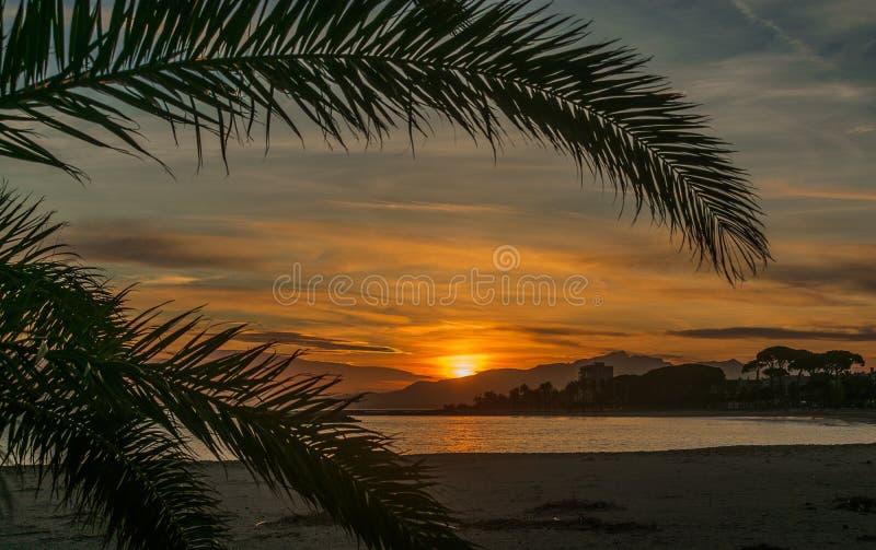 Eine Palme, die den Sonnenuntergang aufpasst stockbilder