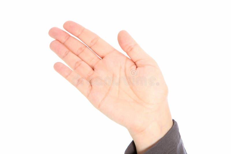 Eine Palme, eine Hand stockfotos