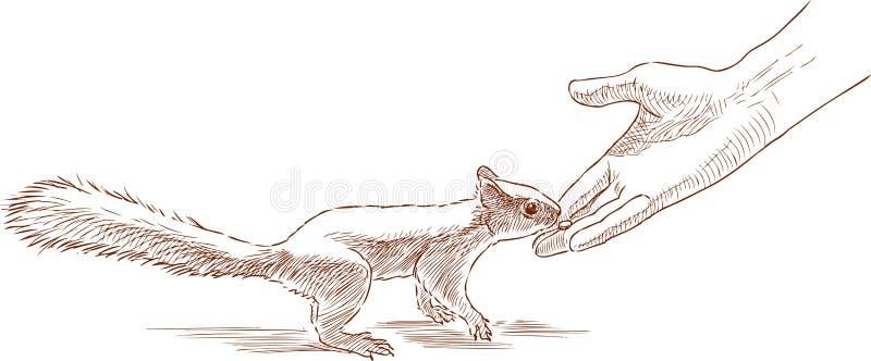 Eine Person, die ein Waldeichhörnchen einzieht vektor abbildung