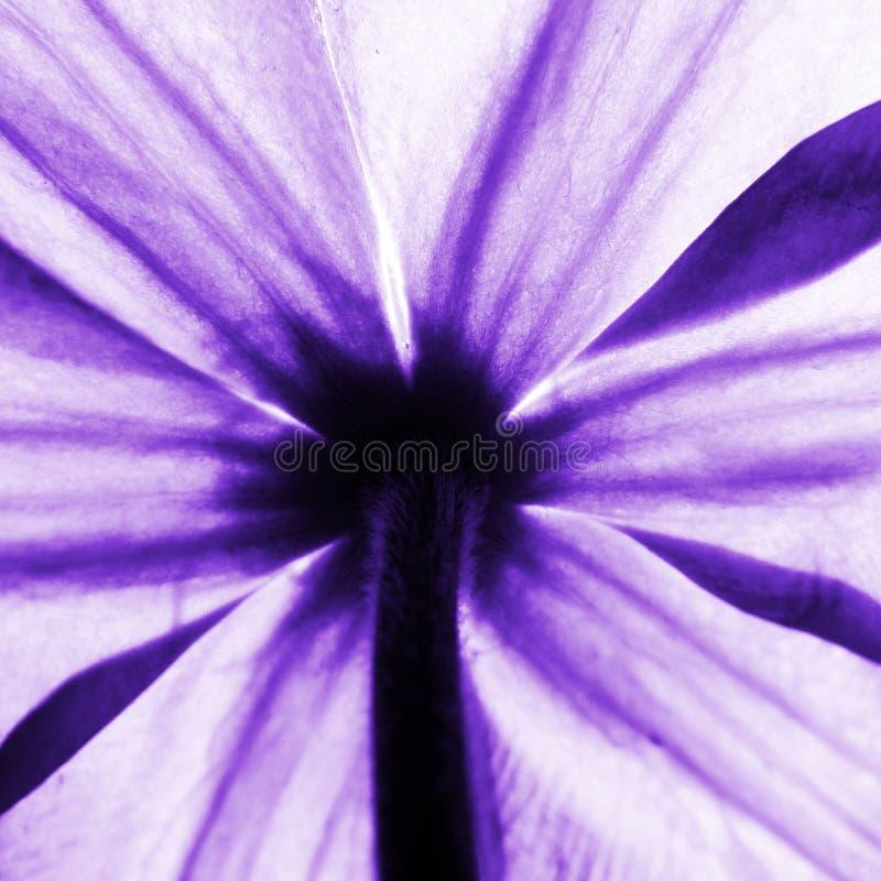 Eine purpurrote Blume von unterhalb gesehen stockbilder