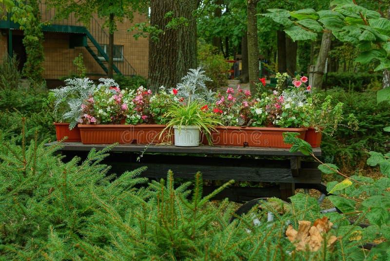 Eine Reihe von Blumentöpfen aus Plastik auf einem schwarzen Holztisch aus einem alten Rollstuhl, inmitten der grünen Vegetation lizenzfreies stockbild
