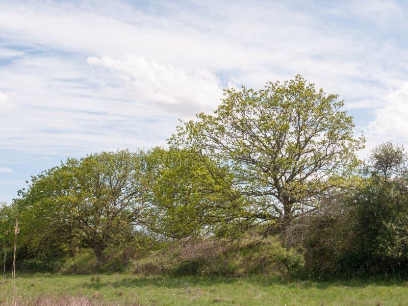 Eine Reihe von grünen Blätter getriebenen Bäumen entlang der Seite eines Wiesenackerlands lizenzfreie stockfotos
