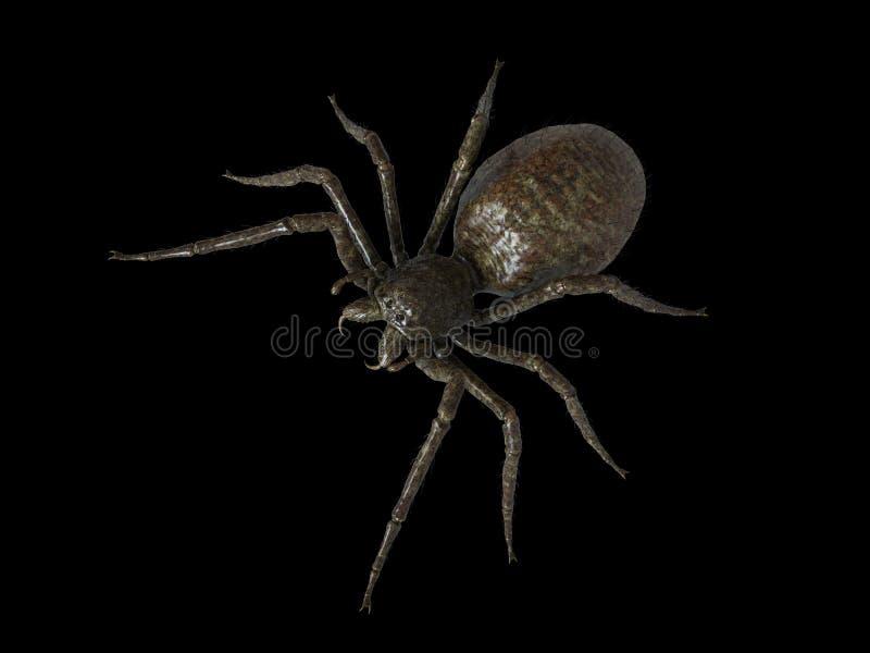 Eine riesige Spinne vektor abbildung