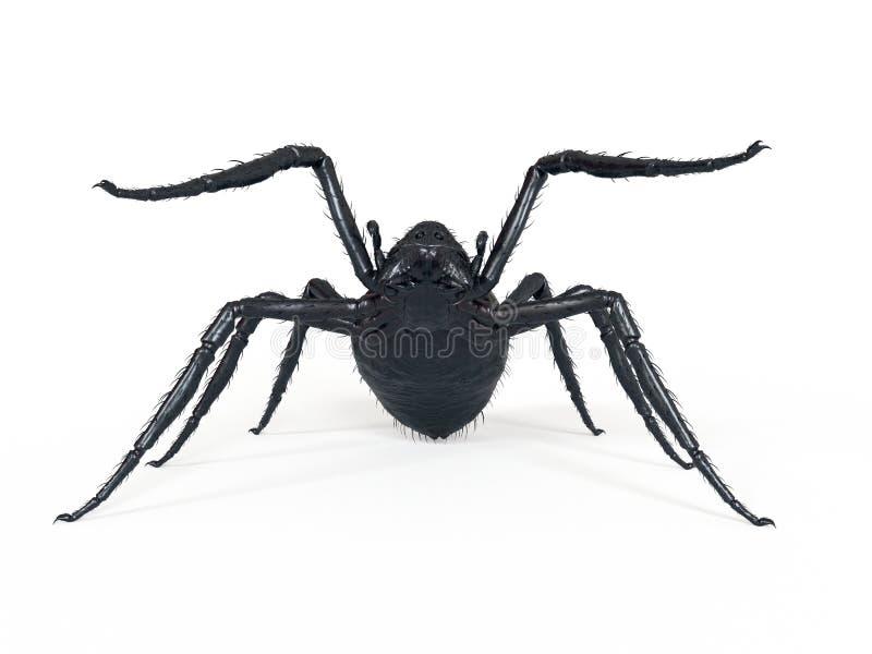 Eine riesige Spinne lizenzfreie abbildung