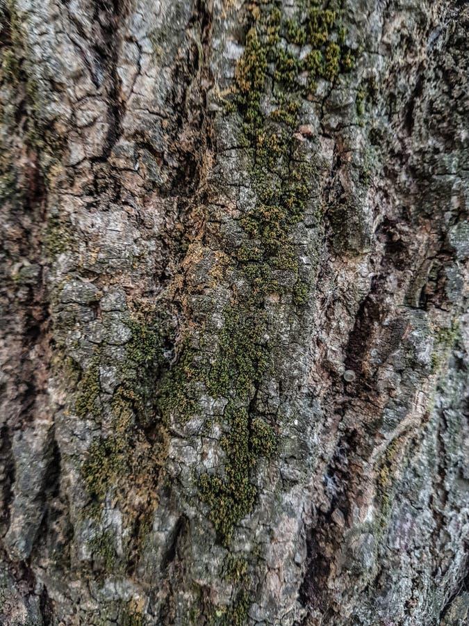 Eine Rinde eines Baums stockbilder