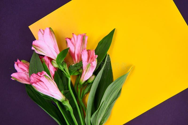 eine rosa Blume legt auf yelow Papier im weißen Hintergrund flache Lageart Raum für Text lizenzfreie stockfotografie