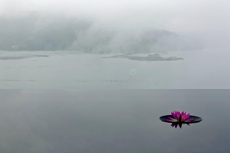 Eine rosa Seerose, die auf einem Unendlichkeitspool mit nebeligen Bergen im Hintergrund unter schwermütigem bewölktem Himmel blüh stockfoto