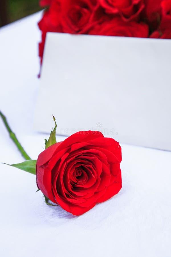 Eine Rose für eine spezielle Person stockfoto