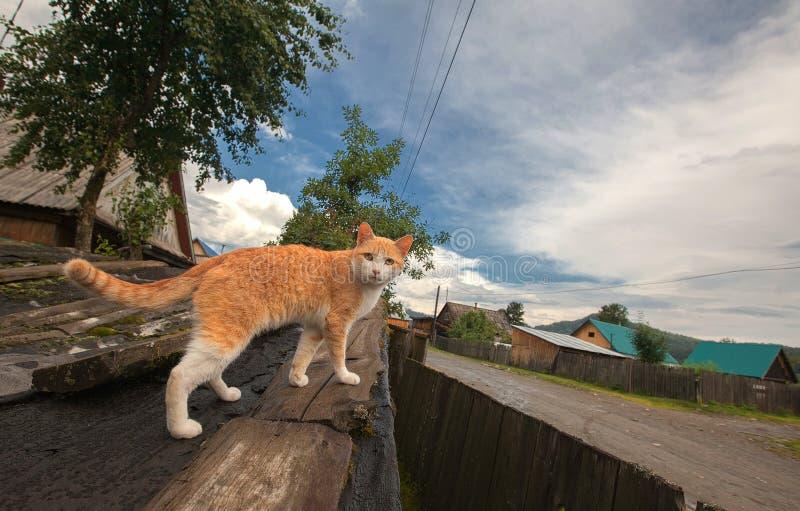 Eine rot-weiße Katze auf dem hölzernen Dach einer kleinen Scheune auf dem Hintergrund des Dorfs und des blauen bewölkten Himmels lizenzfreies stockfoto