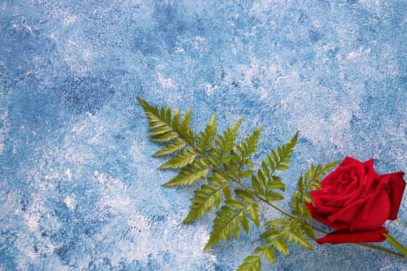 eine rote Rose auf blauem Acrylfarbenhintergrund lizenzfreie stockbilder