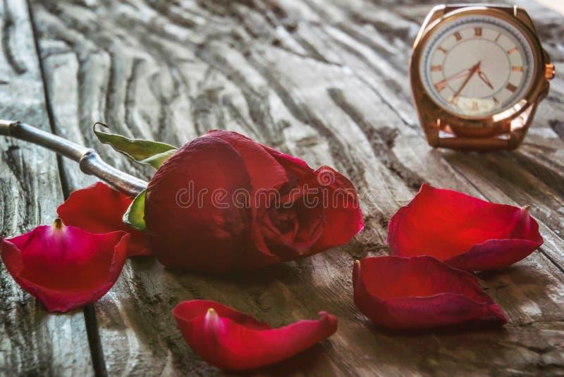Eine rote Rose mit fallenden Blumenblattlügen auf einem alten strukturierten Holztisch Im Hintergrund ist eine vergoldete Uhr lizenzfreies stockbild