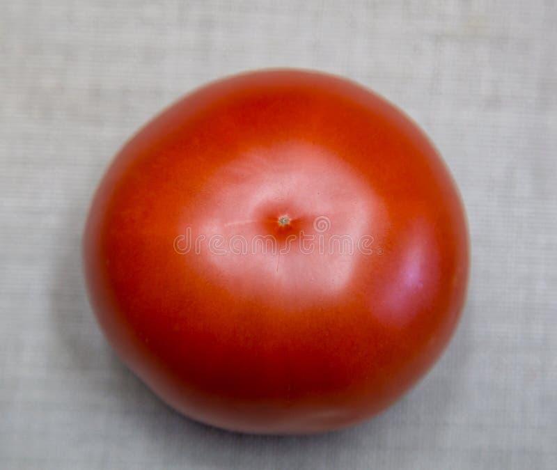 Eine rote Tomate lizenzfreie stockbilder