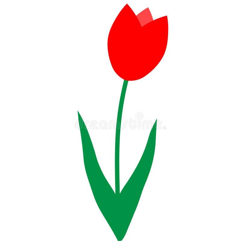 Eine rote Tulpe auf einem weißen Hintergrund lizenzfreie abbildung