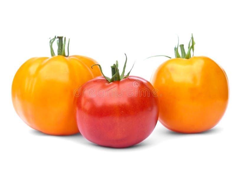 Eine roten und zwei gelben Tomaten lizenzfreie stockfotografie