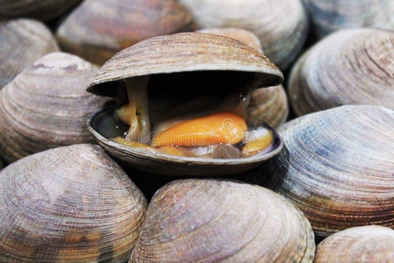 Eine rustikale lachende Muschel lizenzfreie stockfotografie