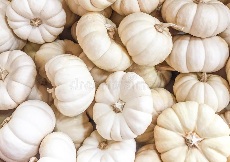 Eine Sammlung von weißem Mini Pumpkins stockbild
