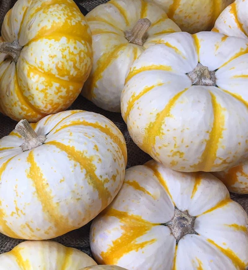 Eine Sammlung von weißem und gelbem Mini Pumpkins lizenzfreie stockfotos