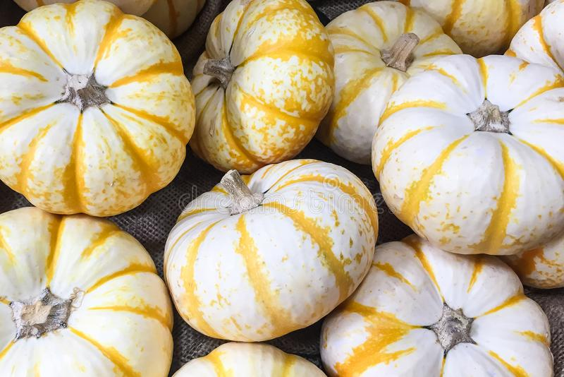 Eine Sammlung von weißem und gelbem SaisonalMini Pumpkins Wallpaper lizenzfreie stockbilder