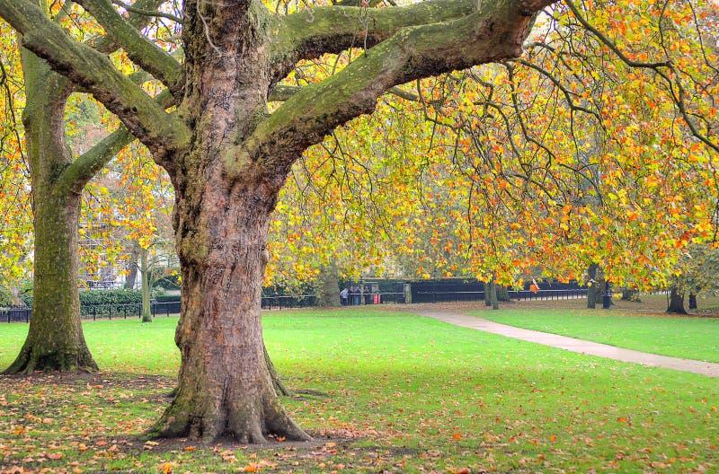 Eine schöne Ansicht von Park St. Jamess in London während des Frühlinges lizenzfreie stockfotografie