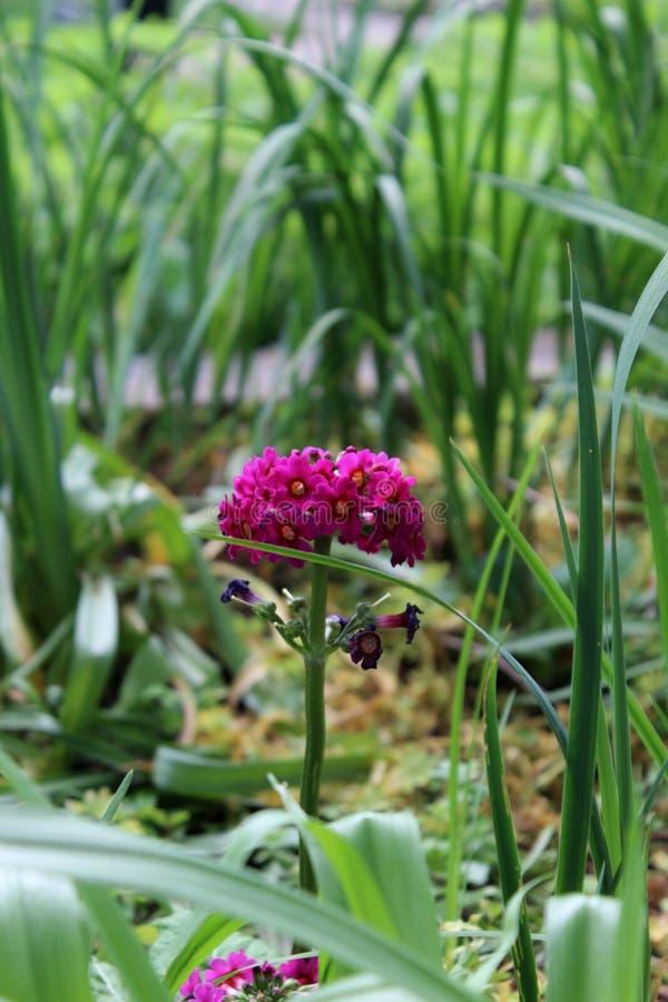 Eine schöne Blume, die im Gras sich versteckt lizenzfreie stockfotos