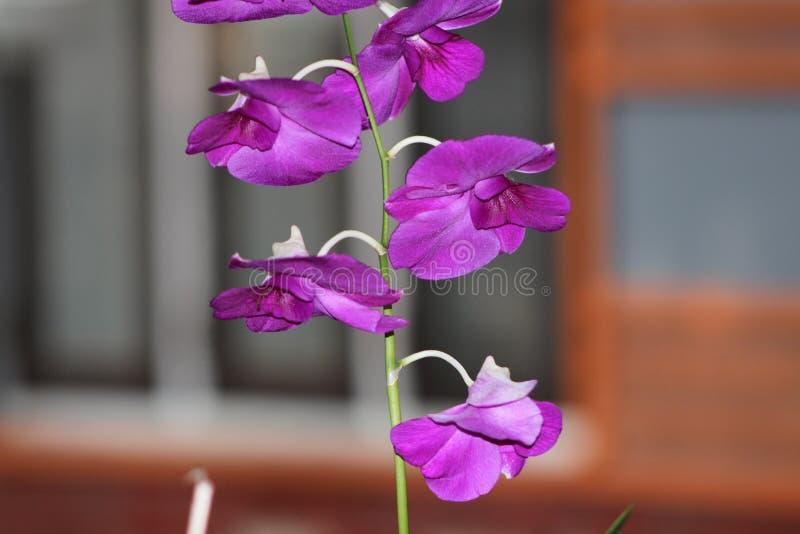 Eine schöne grüne und purpurrote Blume lizenzfreie stockfotografie
