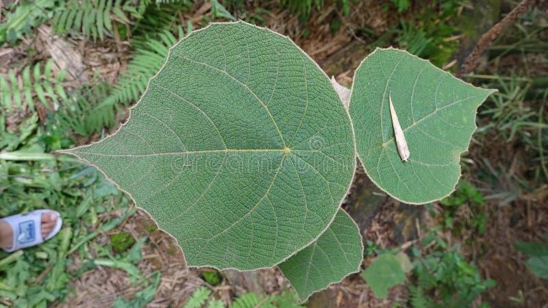 Eine schöne Grünpflanze mit unscharfem Hintergrund stockfotografie